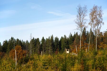 hideout: Sunlit hunting tower in a coniferous forest at fall