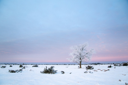llanura: árbol escarchado solo en la gran llanura Stora Alvaret en la isla sueca de Öland Foto de archivo