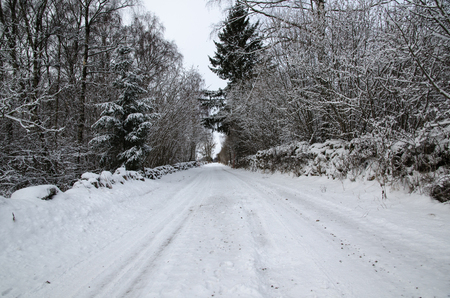 wintery day: Snowy country road through a forest with snow in the trees Stock Photo