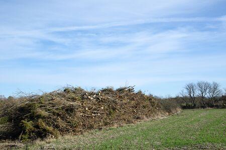 biomasa: Pila de madera de ramas listo para saltar a la energía de la biomasa Foto de archivo