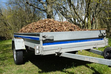 dry cleaned: Small trailer loaded with dry leaves when the garden is cleaned up at spring