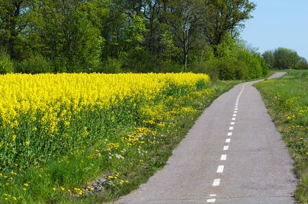cycleway: Cycleway in a spring colored landscape