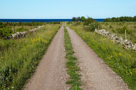 Summer view at a gravel road to the coast at the swedish island Oland in the Baltic Sea