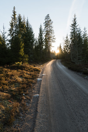 Evening sun at spring season by a gravel road through the woods