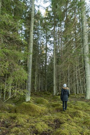 untouched: Woman on her way into a big untouched mossy coniferous forest Stock Photo