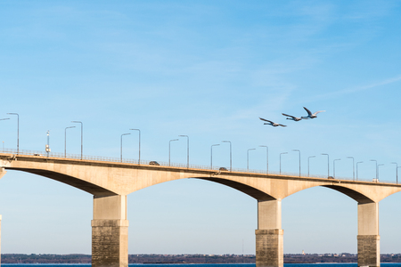 Three mute swans flying over the Oland Bridge in Sweden. The bridge connects the island Oland with mainland Sweden.