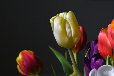 Closeup of a beautiful and colorful tulips bouquet Stock Photo