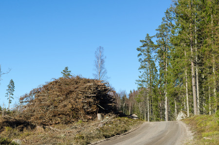 Firewood of branches and tops by roadside