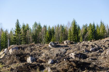 Stony and rocky clear cut area in a coniferous forest