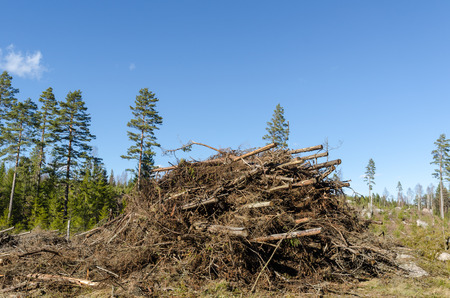 Heap of felling residues going to be wooden chips firewood