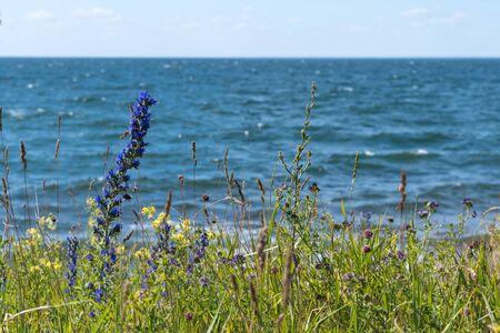 Colorful coastline closeup at the swedish island Oland in the Baltic Sea