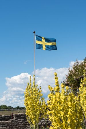 Waving swedish flag with yellow flowers on the ground Stock Photo