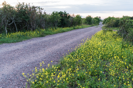Beautiful country road surrounded with yellow summer flowers Stock Photo