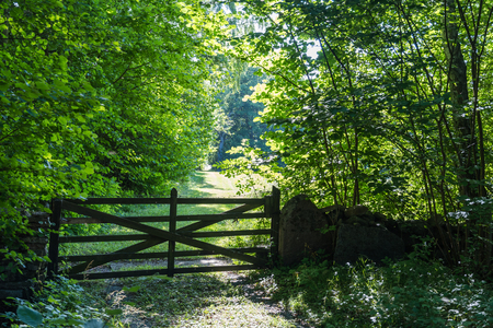 Old wooden gate in a lush greenery at the swedish island Oland