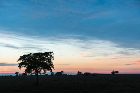 Tree silhouette and trees in the horizon by sunset