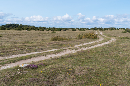 Winding country road in a wide plain grassland