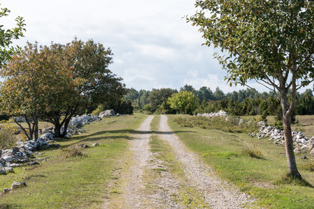 Landscape with a dirt road surrounded of old stone walls at the swedish island Oland Stock Photo