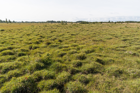 Great wide landscape with grass tufts at the swedish island Oland