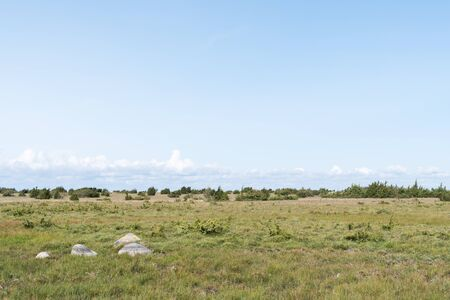 Great plain grassland with junipers at the swedish island Oland