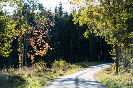 Winding backlit gravel road with colorful trees by fall season