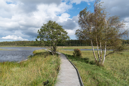Wooden footbridge crossing a wetland in a nature reserve at the swedish island Oland Stock Photo
