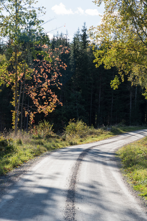 Winding gravel road with colorful trees