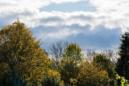 Fall seson with dark clouds and orange colored backlit trees Stock Photo
