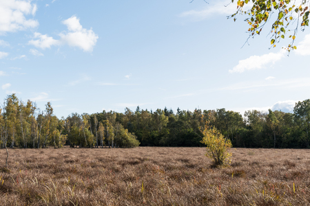 Fall season colored wetland with sedge plants in the forest Stock Photo