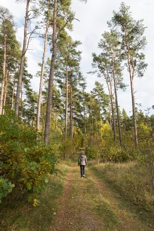 Woman walks in a colored forest by fall season