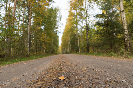 Low perspective image of a gravel road through a colorful forest at fall season