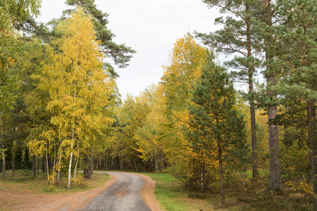 Winding gravel road surrounded with beautiful colored trees at fall season