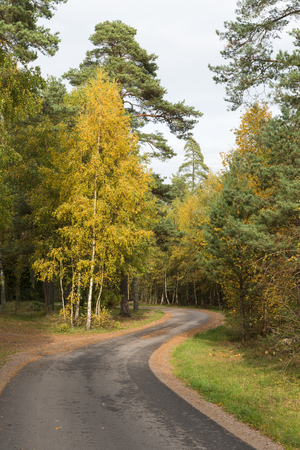 Winding country road in a colorful forest at fall season