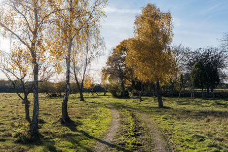 Backlit dirt road in a sparkling fall season colored landscape Stock Photo