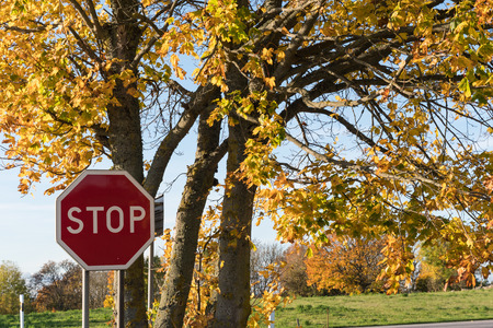 Stop traffic sign by an oak tree in fall season colors Stock Photo