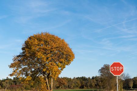 Stop traffic sign by an oak tree in fall season colors in a sunlit landscape Stock Photo