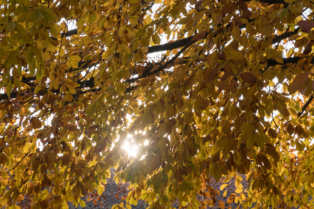 Backlit sparkling colorful beech tree branches Stock Photo