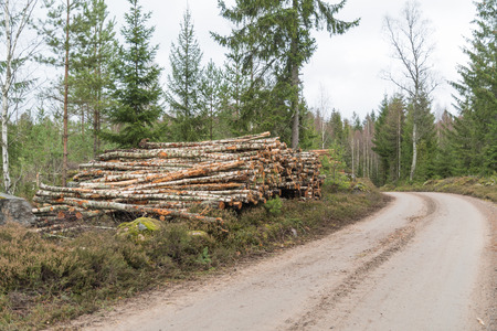 Newly harvested birch pulpwood in a pile by a country roadside Stock Photo