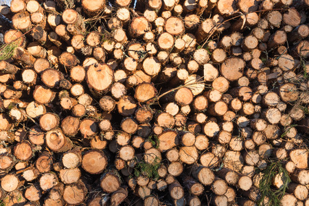 Pattern of a coniferous woodpile of pulpwood