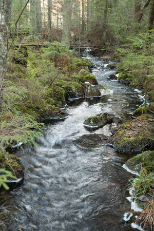 Unspoiled coniferous forest with a winding small creek Stock Photo