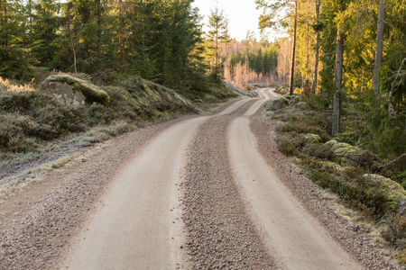 Bright winding gravel road in a coniferous forest