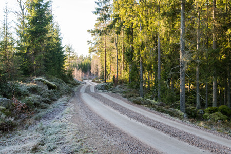 Winding frosty gravel road through a spruce tree forest
