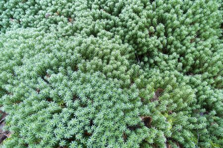Background image of frozen green moss