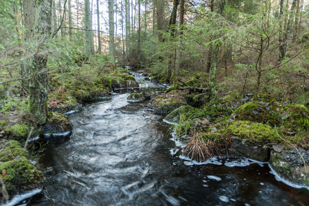 Streamimng water in a small creek in an unspoilt coniferous forest