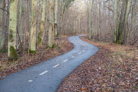 Winding cycle lane by fall season in a decidous forest at the swedish island Oland