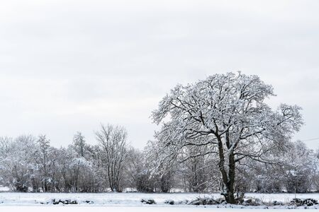 Winter landscape with a big snowy tree Stock Photo