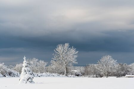 Snowy trees in a wintry landscape with dark sky at the swedish island Oland