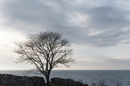 Silhouette of a big bare tree by seaside with a cloudy sky
