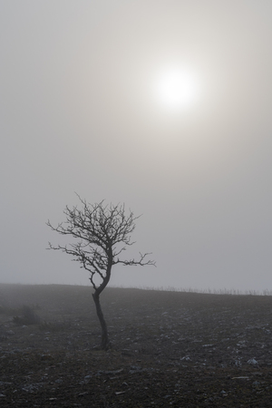 Solitude bare tree in the mist by a faded sun
