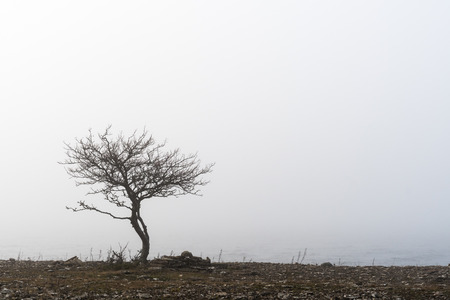 Lone tree in a misty coastal landscape Stock Photo