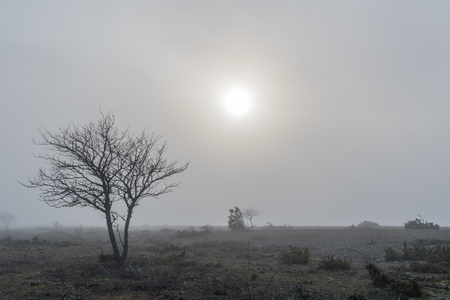 Unique plain landscape, alvar, in the mist at the swedish island Oland in the Baltic Sea